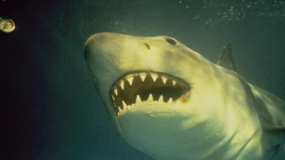 Žralok zabiják je opět ve formě