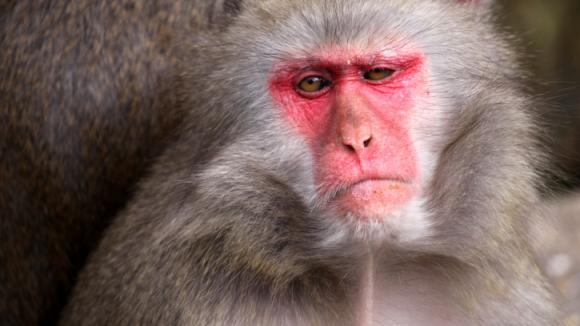 Nespokojená opice
