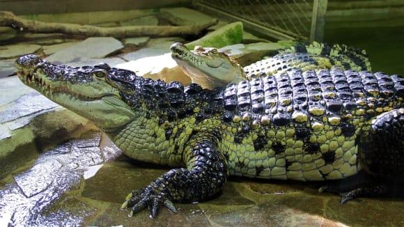 Působivá krokodýlí ZOO v Protivíně.