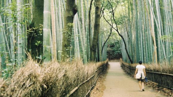 bambusový les - exotická lesní procházka