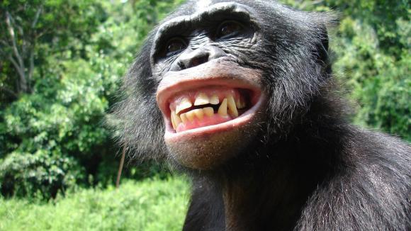 Když se šimpanz usmívá