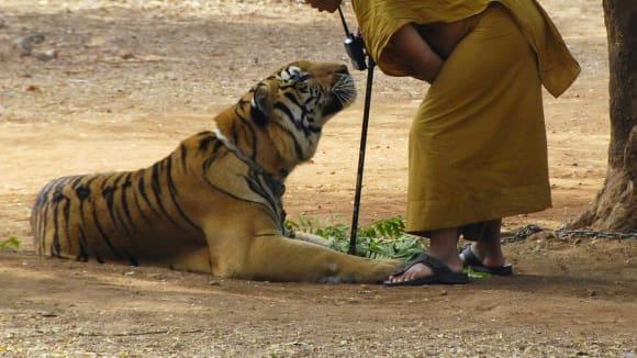 Tygří chrám v Thajsku - Obrázek 1