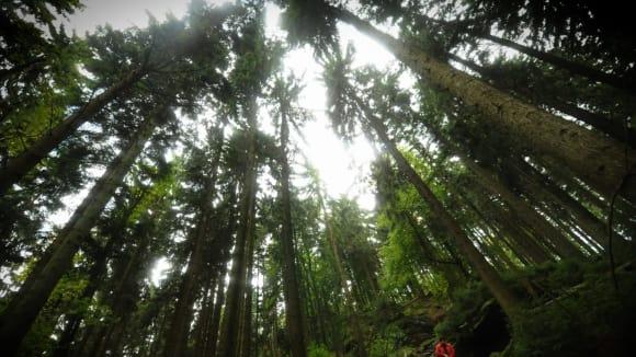 Lesy krásné, lesy mé