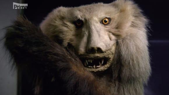Vycpaný medvěd Reinholda Messnera z Tibetu vypadá opravdu dost divně...