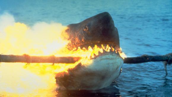 Žralok zabiják zase krouží kolem pobřeží
