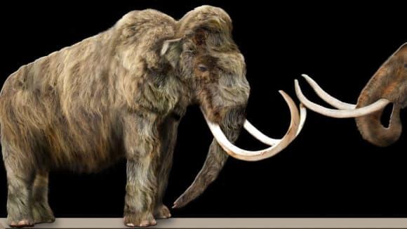 Porovnání dvou druhů mamutů