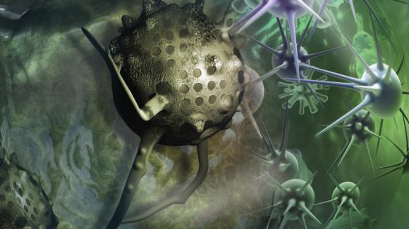 Bujení buněk