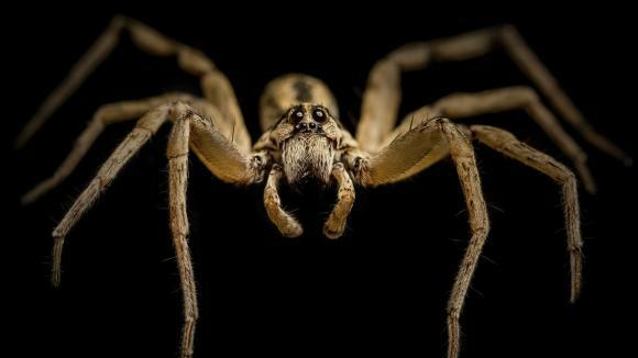 Detailní záběr pavouka