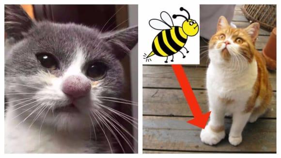 Kočky, které něco štíplo