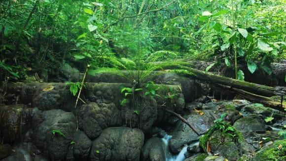 Prales v Palenque
