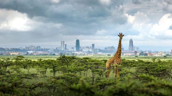 Národní park Nairobi - Obrázek 1