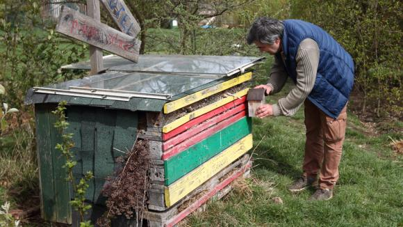 Jak pomoci včelkám samotářkám ke snadnějšímu životu 1