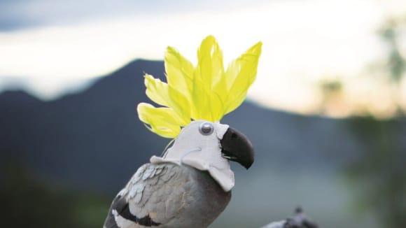 ekotopfilmový kakadu