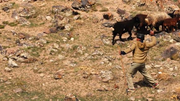"""Íránské pohoří Damavand - pastevec zahání kamením psy. Někteří byli podezřele """"přítulní"""""""