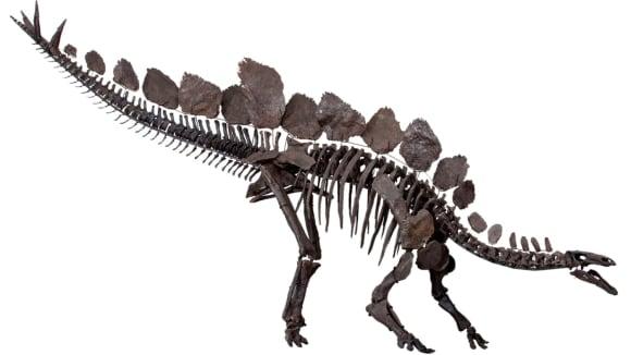 Stegosauří kostra
