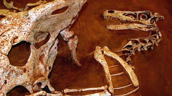 Zkaměnělý velociraptor