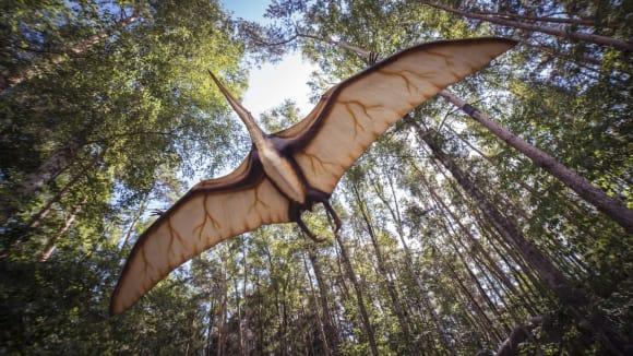 Pterosauři byli první létající obratlovci