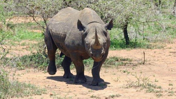 ilustrační foto- nosorožec