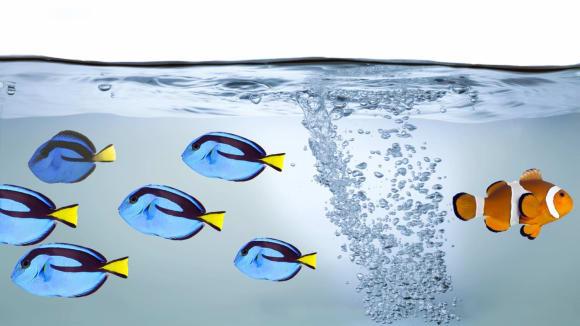 Mají ryby opravdu unikátní osobnost?