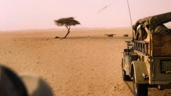 Strom ze saharského Ténéré