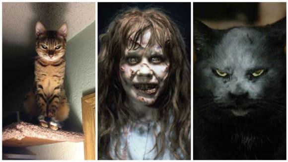 Kočky ve spojení s temnými démony