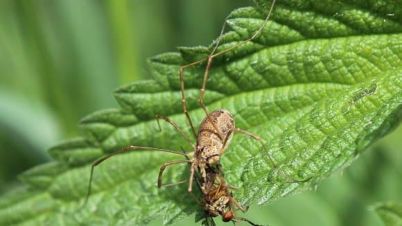 Pavouci mají vážně obrovský apetit.