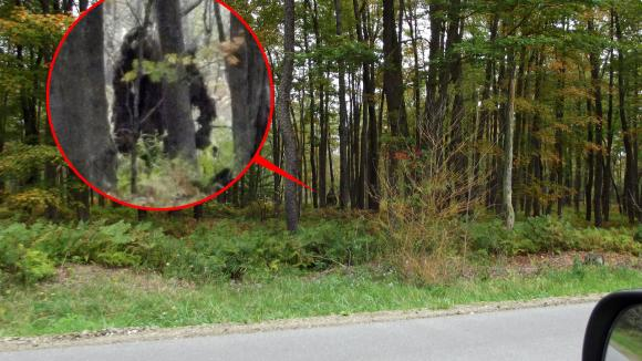 bigfoot-spotted-in-pennsylvfeature