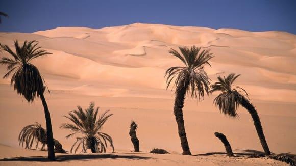 Palmy v libyjské poušti zatím písku vzdorují
