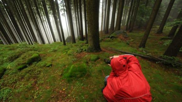 Les je silný, ale skleníkový efekt je silnější
