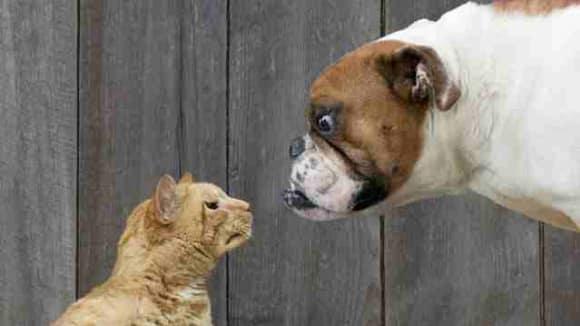 Geneticky žádná nenávist mezi kočkami a psy nevládne