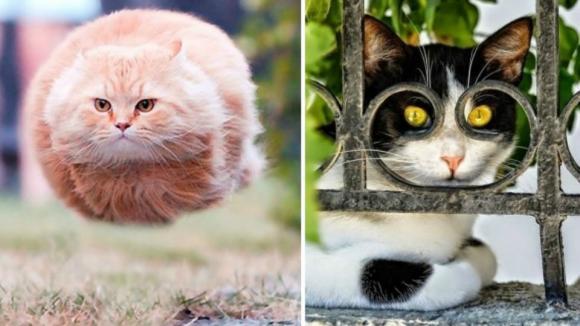 Kočky - základní stavební kámen internetu!