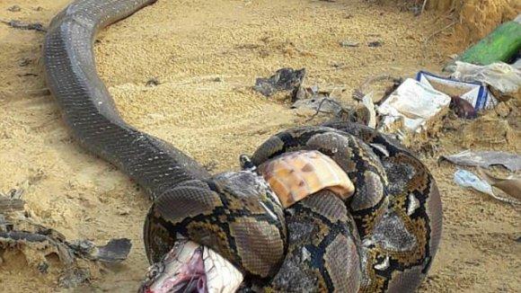 Souboj hadů