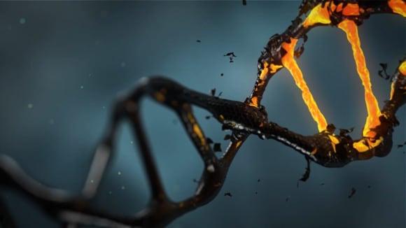 DNA - zakladní molekula života