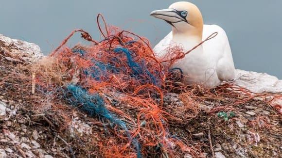 Plasty v moři ročně zabijí kolem jednoho milionu ptáků