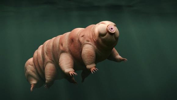 Ano, takhle skutečně vypadají želvušky, které nejspíše přežijí i konec světa.