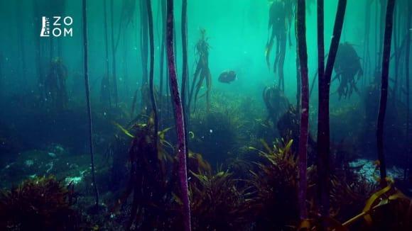Les chaluh u pobřeží Jihoafrické republiky vypadá jako ze sci-fi filmu