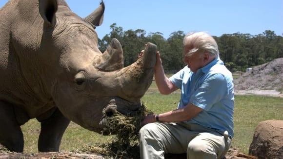 David Attenborough, Počátky života