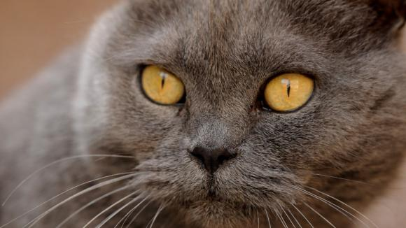Kočka-zabiják