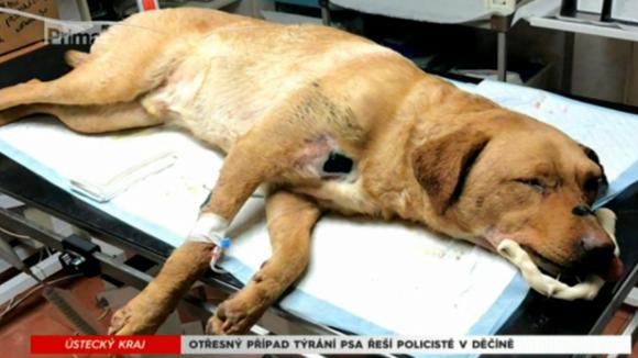 Otřesný případ týraní psa řeší policisté v Děčíně