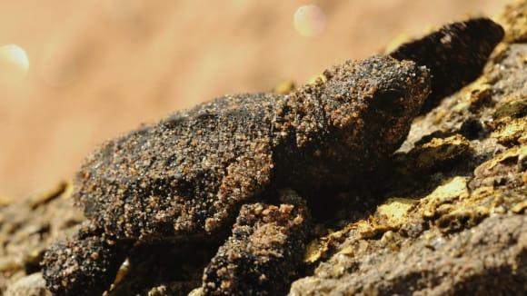 Mořská želva mířící z odchovny ve srílanské Hikaduwě na svobodu