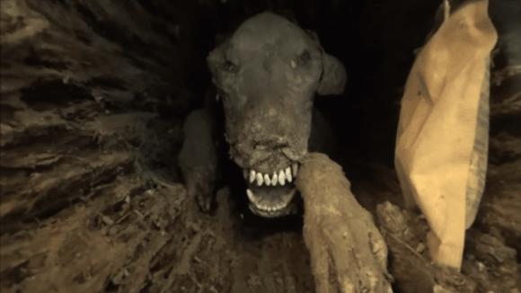 Dřevorubci našli mumii psa