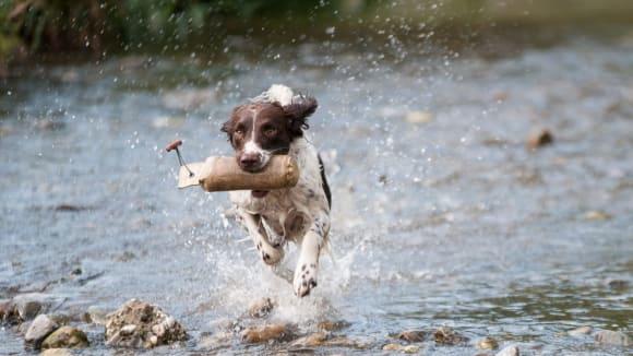 Pes není ani pravák, ani levák, ale severák