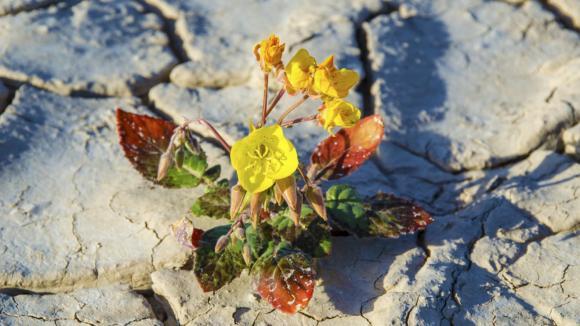 Síla přírody v kalifornském Údolí smrti