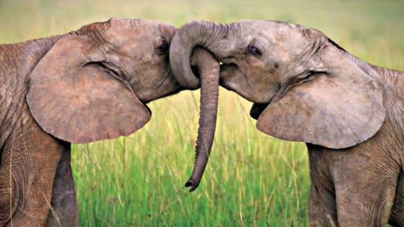 Láska ve zvířecí říši... Je možné, že existuje?