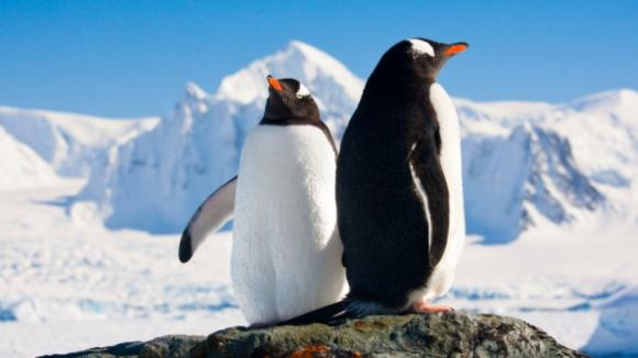 Tučňáci z Antarktidy