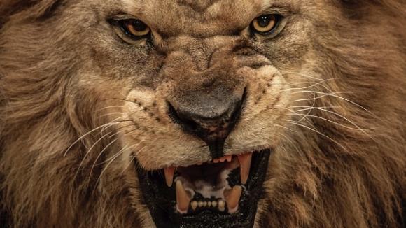 Lví škleb