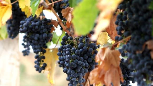 Víno (Primární fotografie)