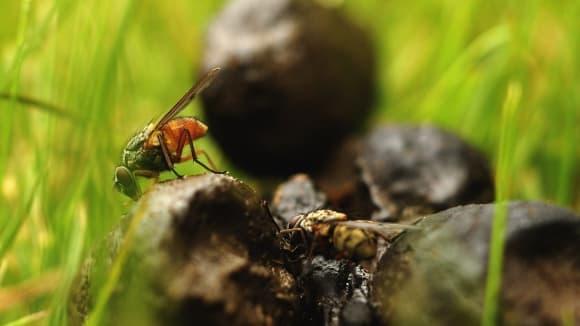 výkaly - budoucí zdroj energie nejen pro hmyz?