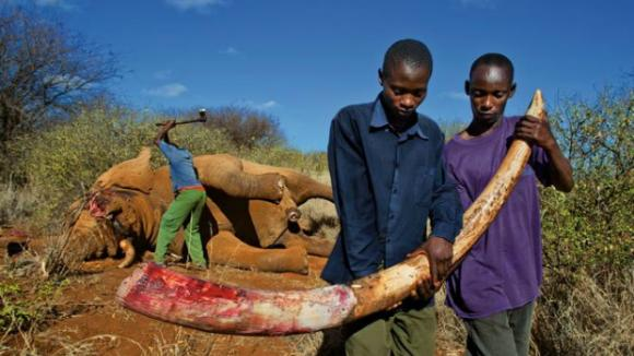 Keňští pytláci