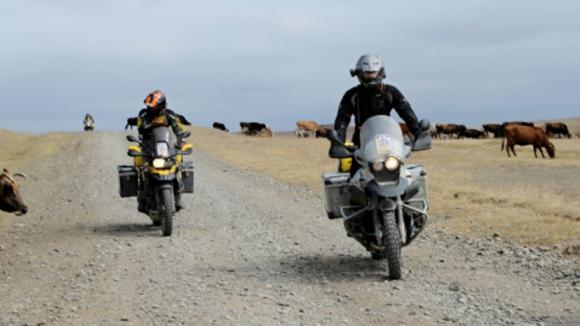 Kličkování mezi dobytkem na polních cestách i silnicích